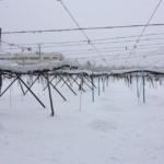 3度目の冬