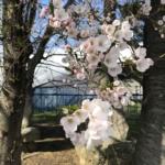 春の北信州