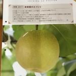 信州の果実