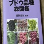 新たなぶどうの品種を栽培します