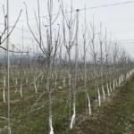 春先の農作業