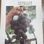 井川ブドウ協会