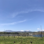 風薫る5月