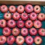 極小玉サンふじりんご